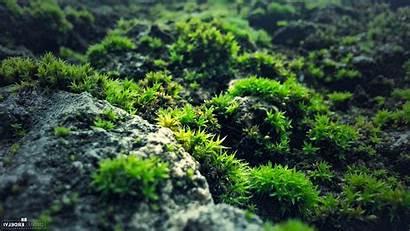 Moss Rock Nature Desktop Backgrounds Wallpapers Mobile