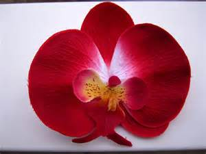 sunflower headband hawaiian orchid flower hair clip or pin bright