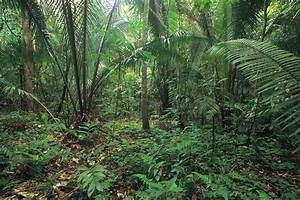 Endangered Plants in the Amazon Rain Forest | Sciencing