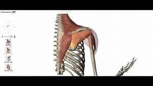 Shoulder Lateral Rotation