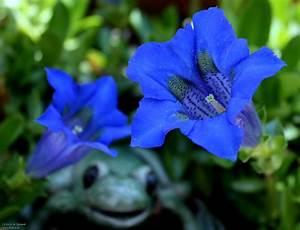 Garten Blumen Bilder : blumen garten bilder news infos aus dem web ~ Whattoseeinmadrid.com Haus und Dekorationen