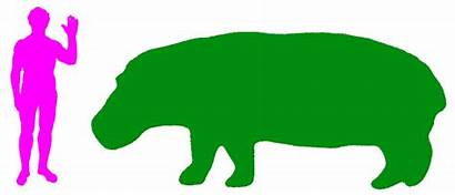 Hippopotamus Animals Land Animal Clipart Habitat Hippo