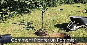 Quand Planter Un Pommier : planter un pommier quand ~ Dallasstarsshop.com Idées de Décoration