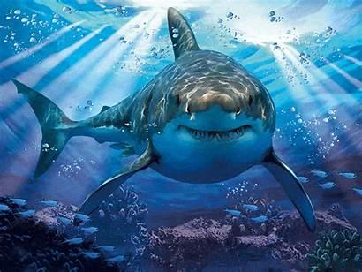 Shark 1000pcs Similar Abstract Ean κωδικός Gr