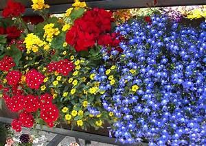 Herbstliche Blumenkästen Bilder : laga 2010 landesgartenschau aschersleben 002 farbige ~ Lizthompson.info Haus und Dekorationen