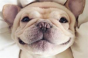 Ich Möchte Französisch : die besten 25 lustige franz sische bulldogge ideen auf pinterest franz sisch bulldog welpen ~ Eleganceandgraceweddings.com Haus und Dekorationen