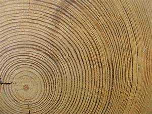 Spasms Of Accommodation  Tree Rings