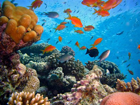 coral reefs reef plants seagrass clean waters magazine