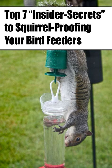 best 25 squirrel proof bird feeders ideas on pinterest