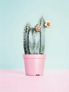 Pink-Cactus | Tumblr