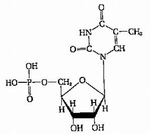 Related Keywords & Suggestions for nucleic acid molecule