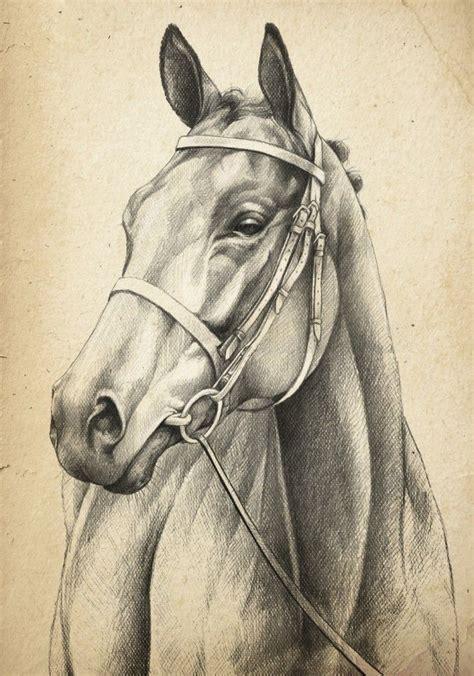 horse head drawing  doevmeleri hayvan eskizleri