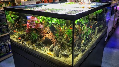 Aquascape Store by Epic Aquarium Fish And Aquascaping Store Aquajardin