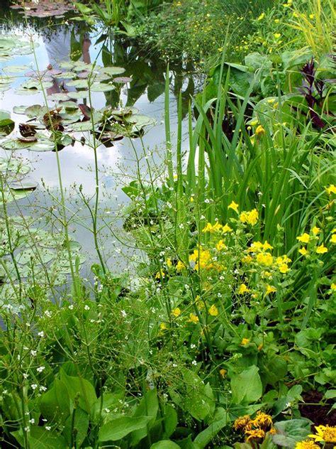 water garden plants plants in nanopics garden flowers