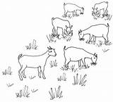 Line Goat Drawing Grazing Herd Goats Drawings Coloring Pages Sheep Maps Embroidery Colouring Cute Herding Map Flickr Draw sketch template