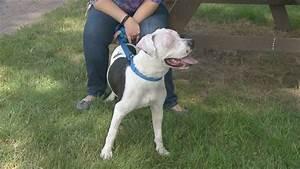blind burned dog finds home firefighter training