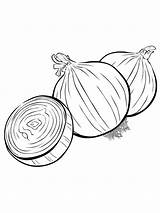Onion Coloring Pages Colouring Vegetables Must Print Printable Picolour Colors Popular Recommended sketch template