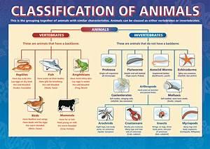 Classification of Animals, Dicotomous Key, Taxonomy ...