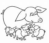 Pig Coloring Pages Baby Pigs Guinea Outline Mother Drawing Printable Cute Colouring Valentine Pot Realistic Mammals Animals Bellied Supercoloring Colorings sketch template