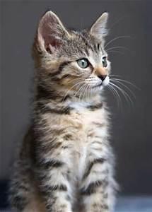 Katze Im Haus Halten : katzeninfoseite unsere geliebten katzen katzeninfoseite ~ Lizthompson.info Haus und Dekorationen