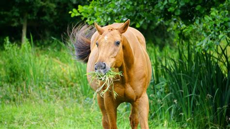 horse grass eating feed animals horses facts digestive system why mammals clippings digestion eat them cuttings fascinating learn field eats