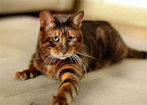 Top 10 Most Beautiful Cat Breeds In The World - The ...