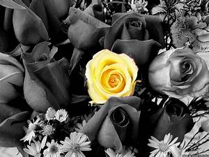 Black And White Pictures of Flowers With Color images