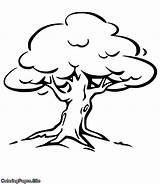 Oak Tree Coloring Ratan Ashit Sarkar Drawing sketch template