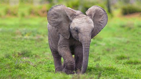 cute baby elephant superb wallpapers hd wallpapers rocks