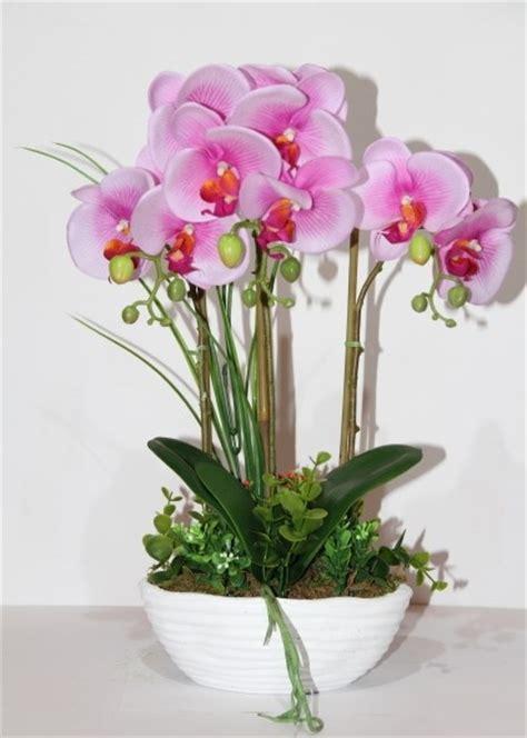 Come Curare Le In Vaso by Orchidea Come Curare E Coltivare Le Orchidee In Vaso E In