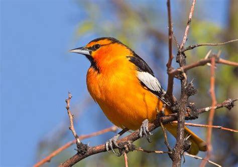 coolorado colorful colorado birds at chatfield reservoir