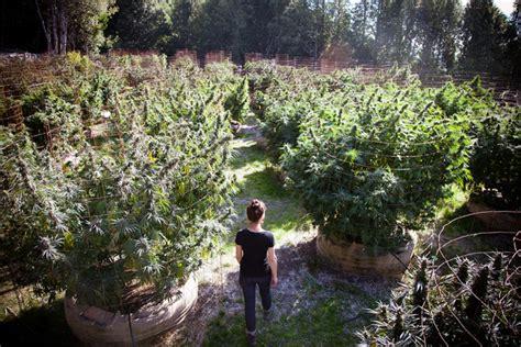 The Secret To Humboldt Farms' Fantastic Flower