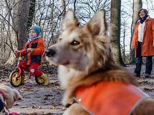 Ich Suche Einen Großen Hund : wie verhalte ich mich wenn ich einen hund treffe kinder ~ Jslefanu.com Haus und Dekorationen