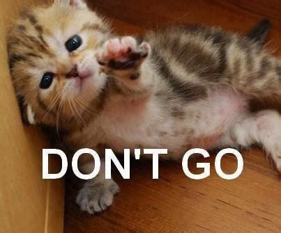dont leave    p xd image cat lovers indie db