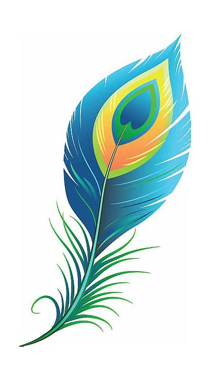 Peacock Feather Feathers Clipart Vector Clip Background