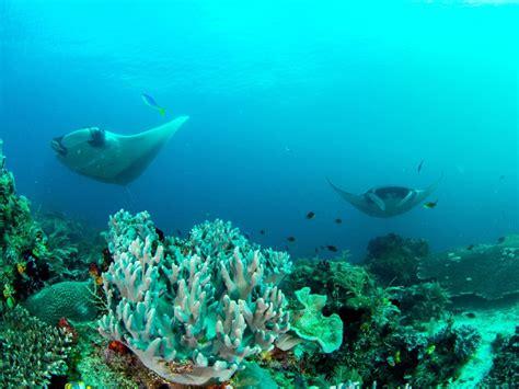 Die Raja Ampat Inseln. Alles, was Sie über die Inseln ...