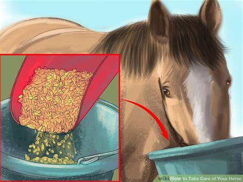 horse care take wikihow