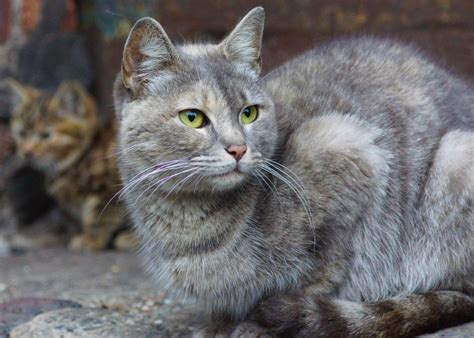 Trapneuterrelease (tnr) To Control Feral Cat Populations