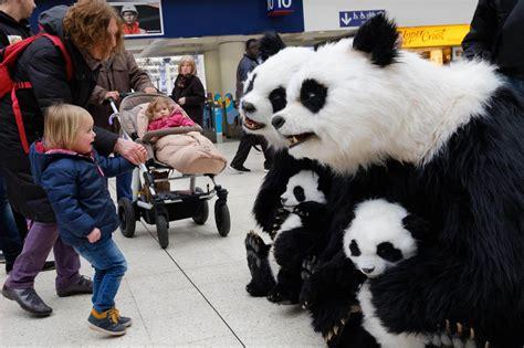 family  life sized pandas visit londons landmarks