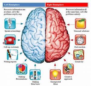 Human brain: Cerebral Hemispheres