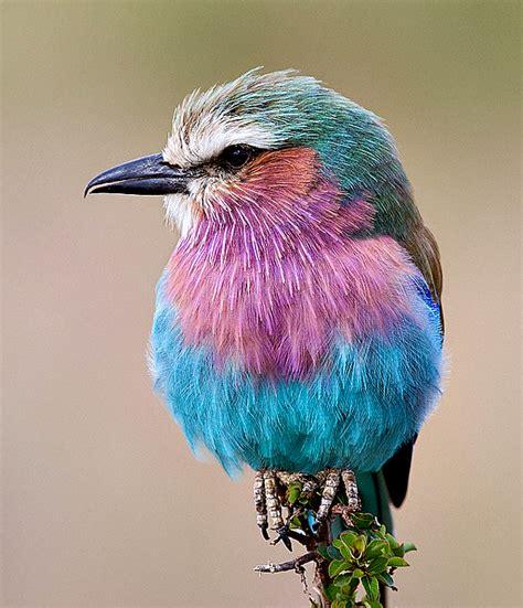 bird colors world top pictures beautiful birds wallpapers new birds