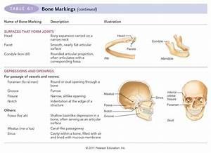 Bio 430 Study Guide  2012-13 Smith