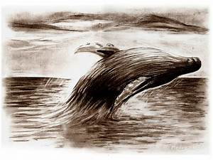 Humpback Whale by Medvezh on DeviantArt