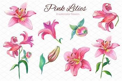 Clipart Watercolor Lily Flowers Flower Lilies Creativemarket