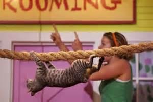 cat gymnastics gymnastics cat kendahl babs