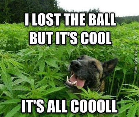 Marijuana Memes - weed memes best collection of funny weed pictures