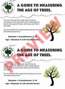 Tree Age Investigation