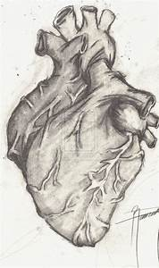 Drawings Of A Real Heart | www.imgkid.com - The Image Kid ...