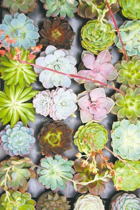 Garden Beautiful Succulents by Sensational Succulents Winnipeg Free Press Homes