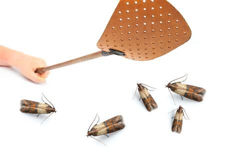 invasion of the pantry moths my little bird